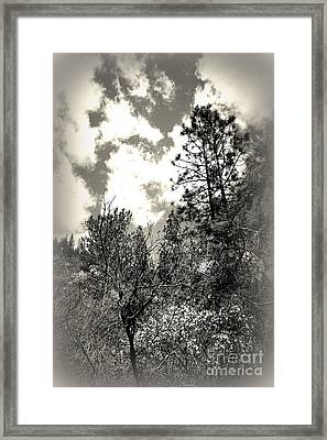 Tall Trees In Lake Shasta Framed Print by Garnett  Jaeger