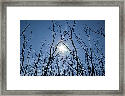 Tangled Skeletal Finger-like Bows Reach Framed Print by Jason Edwards