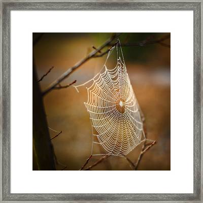 Tangled Web Framed Print by Brenda Bryant