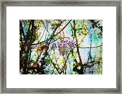 Tangled Wisteria Framed Print by Andee Design