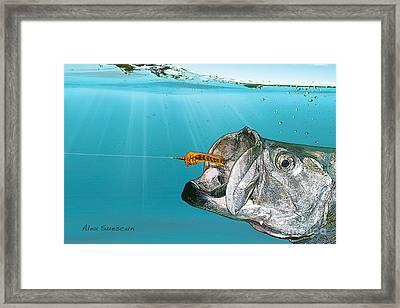 Tarpon Take Framed Print by Alex Suescun