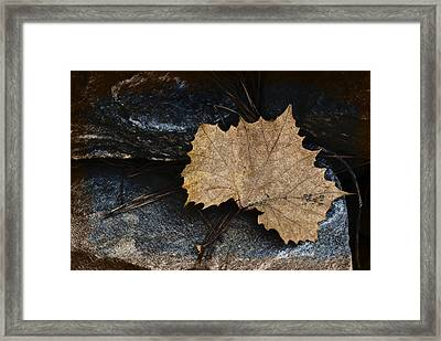 Tears To Fall Framed Print by Kelly Rader