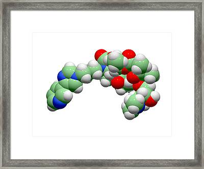 Telithromycin Antibiotic Molecule Framed Print by Dr Tim Evans