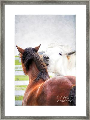 Telling Secrets Framed Print by Darren Fisher