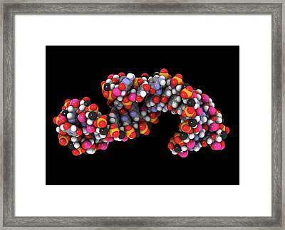 Telomerase Molecule, Artwork Framed Print by Laguna Design