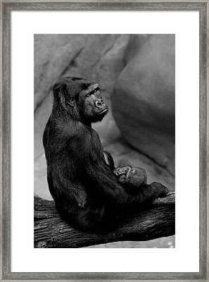 Tender Moment Framed Print by Sebastian Musial