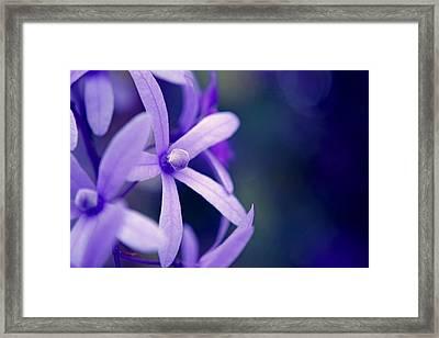 Tender Petals Framed Print by Melanie Moraga