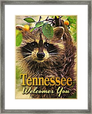 Tennessee Racoon Framed Print by Flo Karp