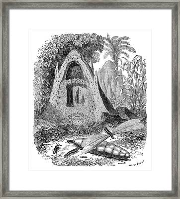 Termite Mound And Castes Framed Print by