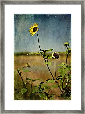 Textured Sunflower Framed Print by Melany Sarafis