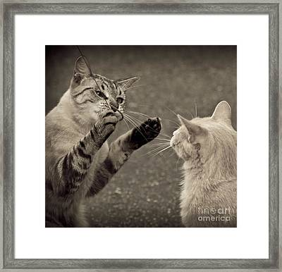 That Mouse Was This Big Framed Print by Kim Henderson