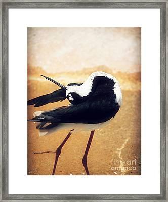The Ballerina Bird Framed Print by Peggy  Franz