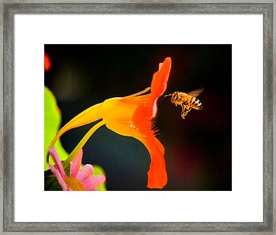 The Bee Framed Print by Mickey Clausen