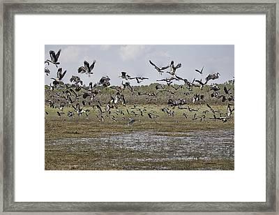 The Billabong V19 Framed Print by Douglas Barnard