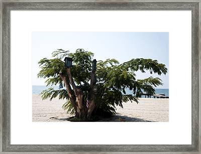 The Birdhouse Tree On The Beach Framed Print by Bill Cannon