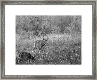 The Buck Bw Framed Print by Ernie Echols