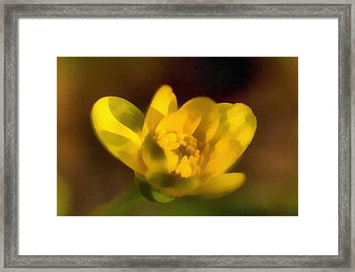 The Buttercup Framed Print by Odon Czintos