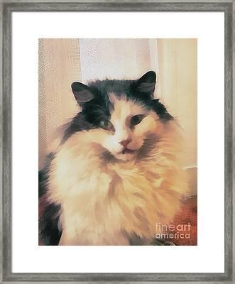 The Cat Portrait Framed Print by Odon Czintos