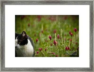 The Clover Field Framed Print by Kim Henderson
