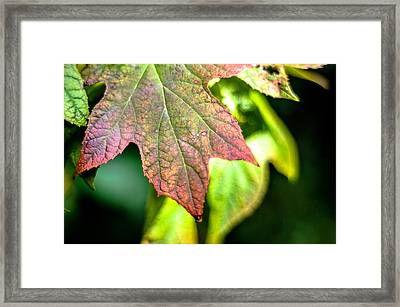 The Colors  Framed Print by The Phoblographer