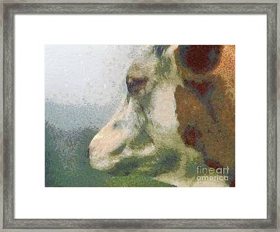 The Cow Portrait Framed Print by Odon Czintos