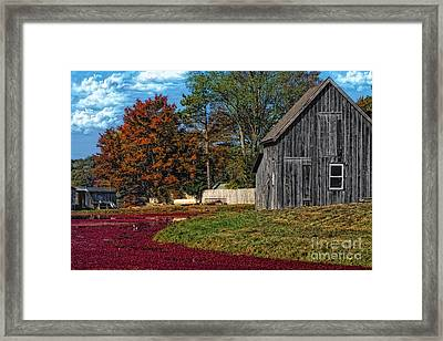 The Cranberry Farm Framed Print by Gina Cormier