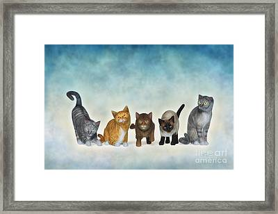 The Cute Ones Framed Print by Jutta Maria Pusl