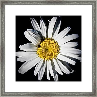 The Daisy Framed Print by David Patterson