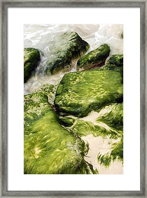 The Dance Of Nature Framed Print by Sophie Vigneault