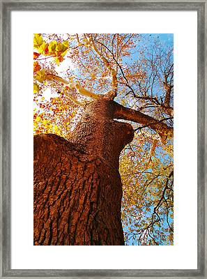 The Deer  Autumn Leaves Tree Framed Print by Peggy  Franz