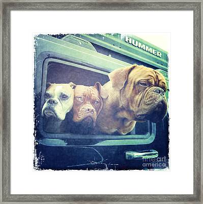 The Dog Taxi Is A Hummer Framed Print by Nina Prommer