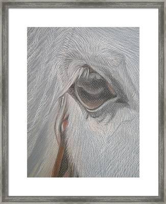 The Eye  Framed Print by Stephanie L Carr