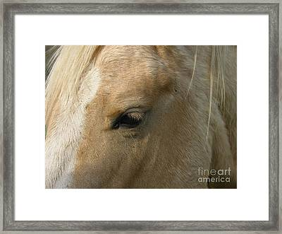 The Eye Framed Print by Yumi Johnson