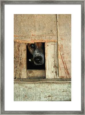 The Face Of Hoarding Framed Print by Nola Lee Kelsey