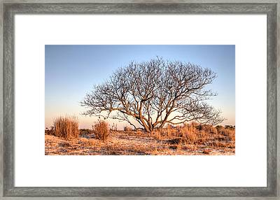 The Family Tree Framed Print by JC Findley