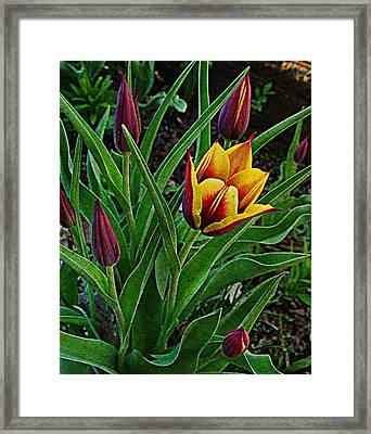 The First One Out Framed Print by Chris Berry