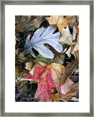 The Gathering Framed Print by Trish Hale