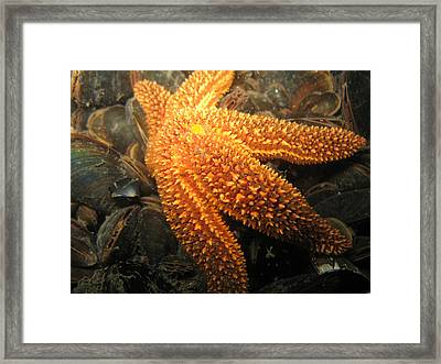 The Great Starfish Framed Print by Paul Ward