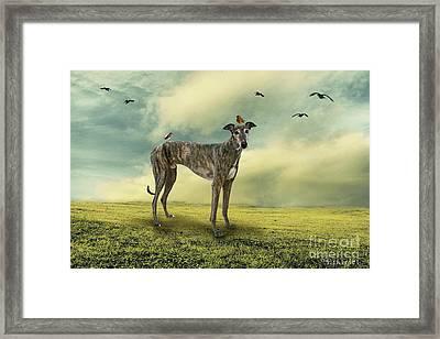 The Greyhound Framed Print by Ethiriel  Photography
