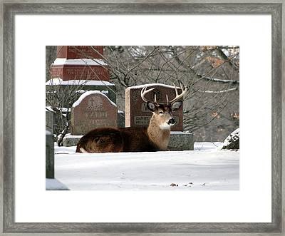 The Guardian In Winter Framed Print by Bruce Ritchie