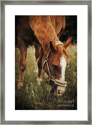 The Horse Framed Print by Angela Doelling AD DESIGN Photo and PhotoArt