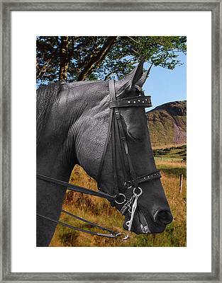 The Horse - God's Gift To Man Framed Print by Christine Till