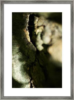 The Initiate Framed Print by Rebecca Sherman