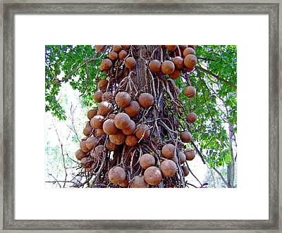 The Juggler Framed Print by Peter P G