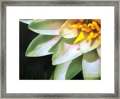 The Lily Flower Framed Print by Odon Czintos