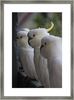 The Line-up Framed Print by Douglas Barnard