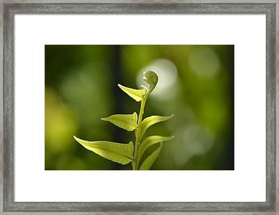 The Little Angel Framed Print by Melanie Moraga
