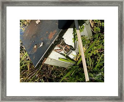 The Lock Box Framed Print by Trish Hale