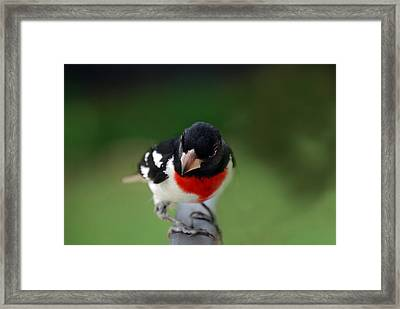The Look Framed Print by Skip Willits