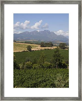 The Lush Garden Landscape Of A Vineyard Framed Print by Stacy Gold